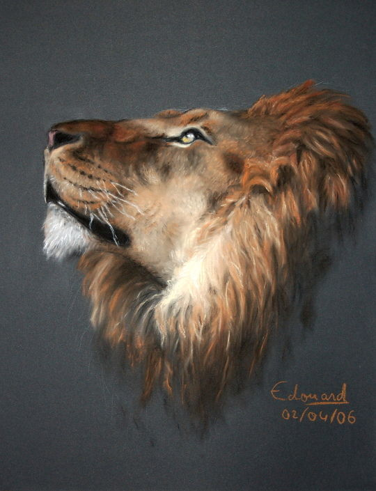The lion - Drawing : Portrait | Edouard Lefebvre Graphic ...